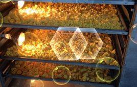 Máy sấy lạnh tinh bột nghệ lựa chọn thích hợp để sản xuất bột nghệ